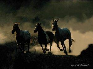 foto_cavalli_332